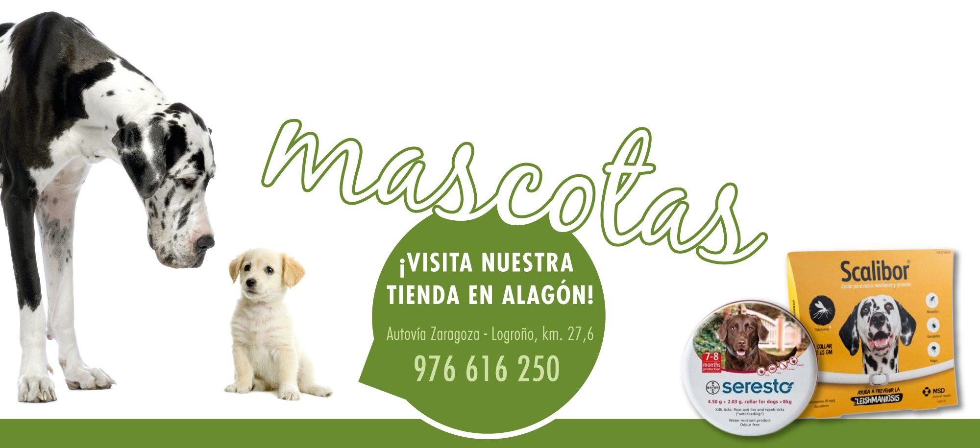 slider_mascotas